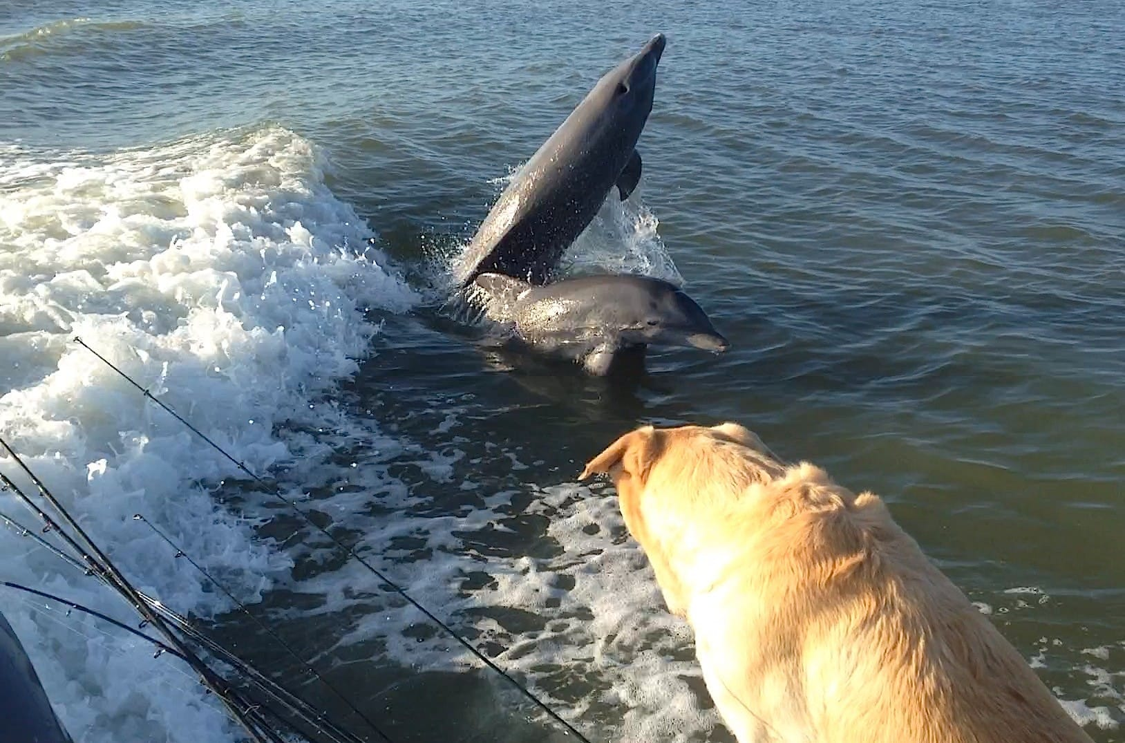 1 30 14 fort myers fishing report captiva dolphins for Fort myers fishing